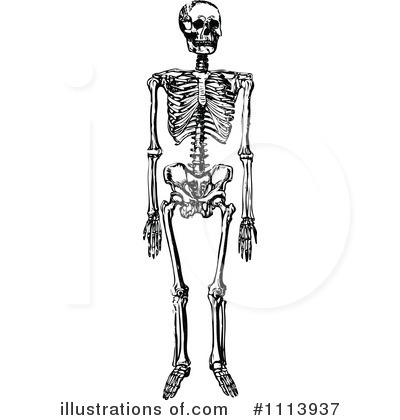 Skeleton clipart copyright free.  clipartlook