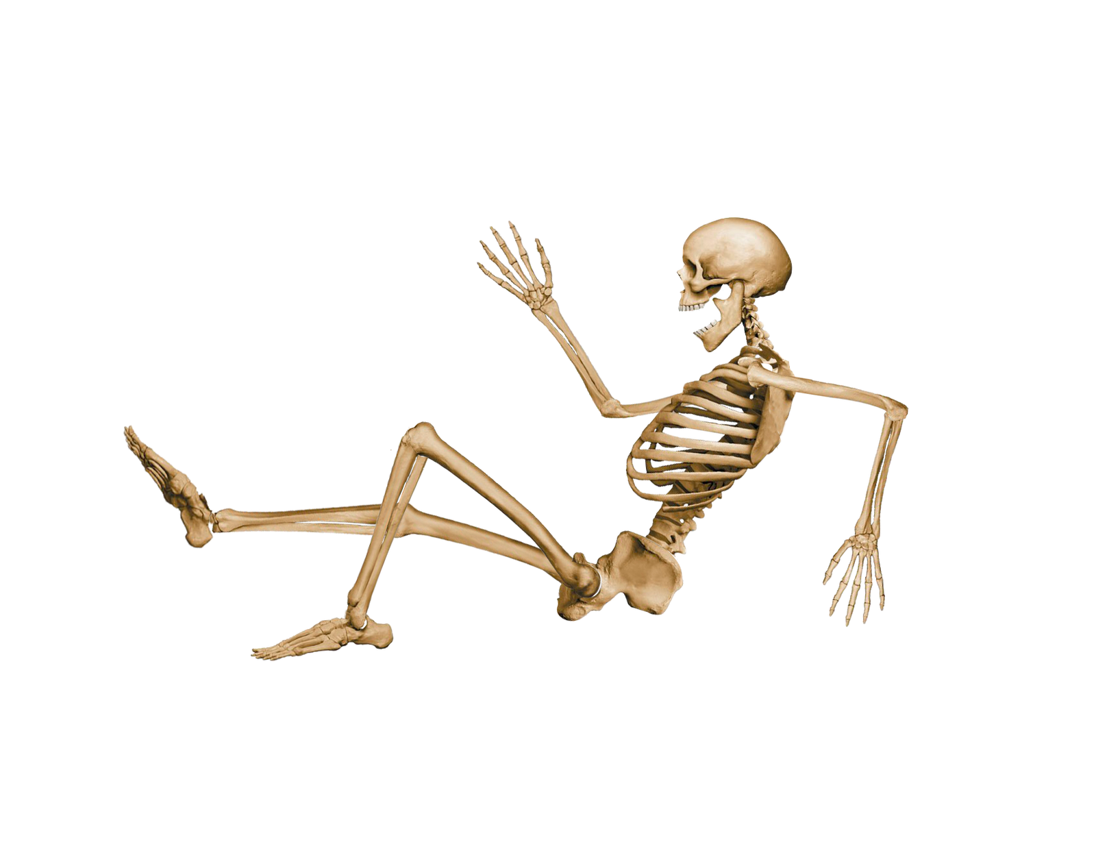 Human six isolated stock. Pigs clipart skeleton