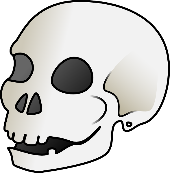 Thumb clipart sideways. Human skull clip art