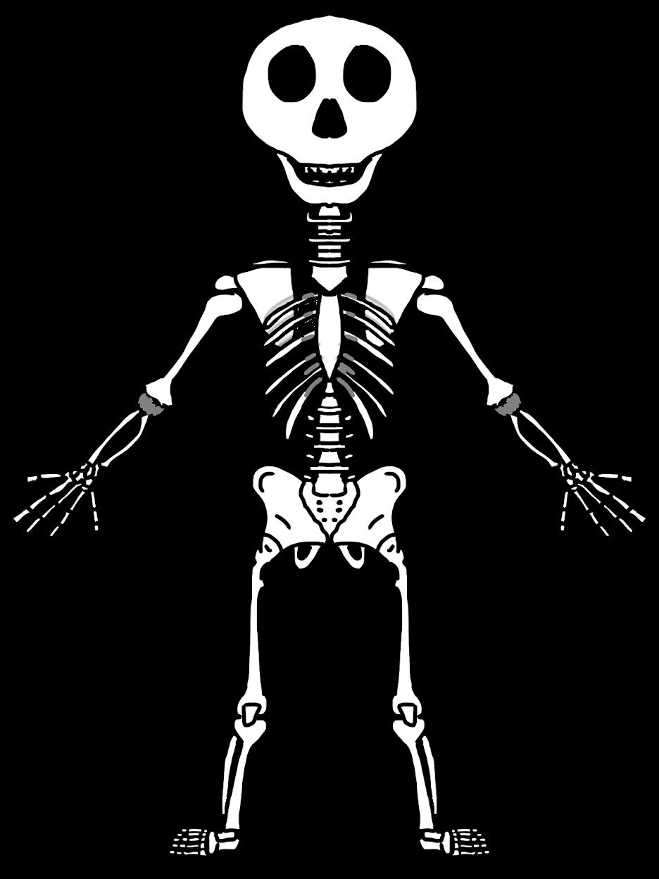 Skeletal system drawing at. Skeleton clipart body part