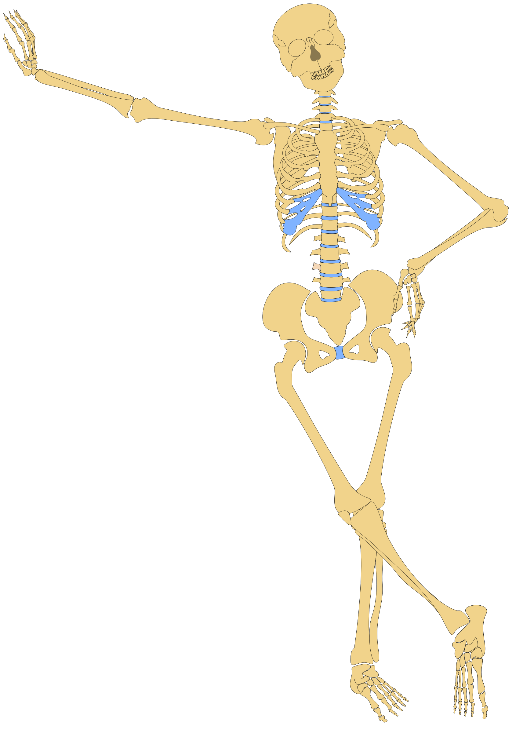 Skeleton clipart skeleton outline. Human big image png
