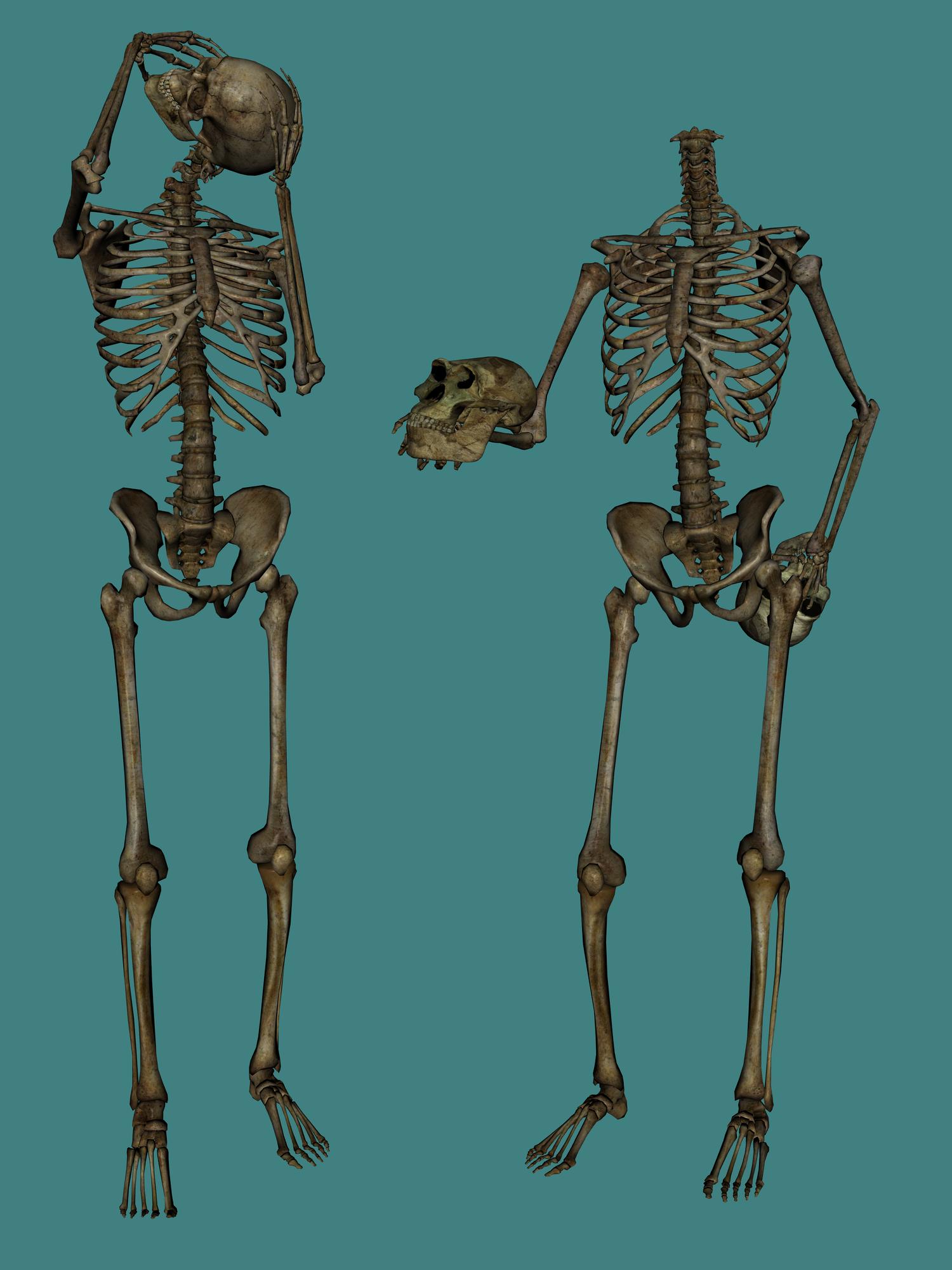 Skeleton skull image purepng. Png stock images