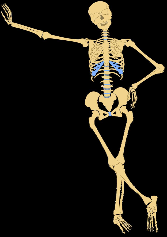 Public domain clip art. Skeleton clipart skelaton