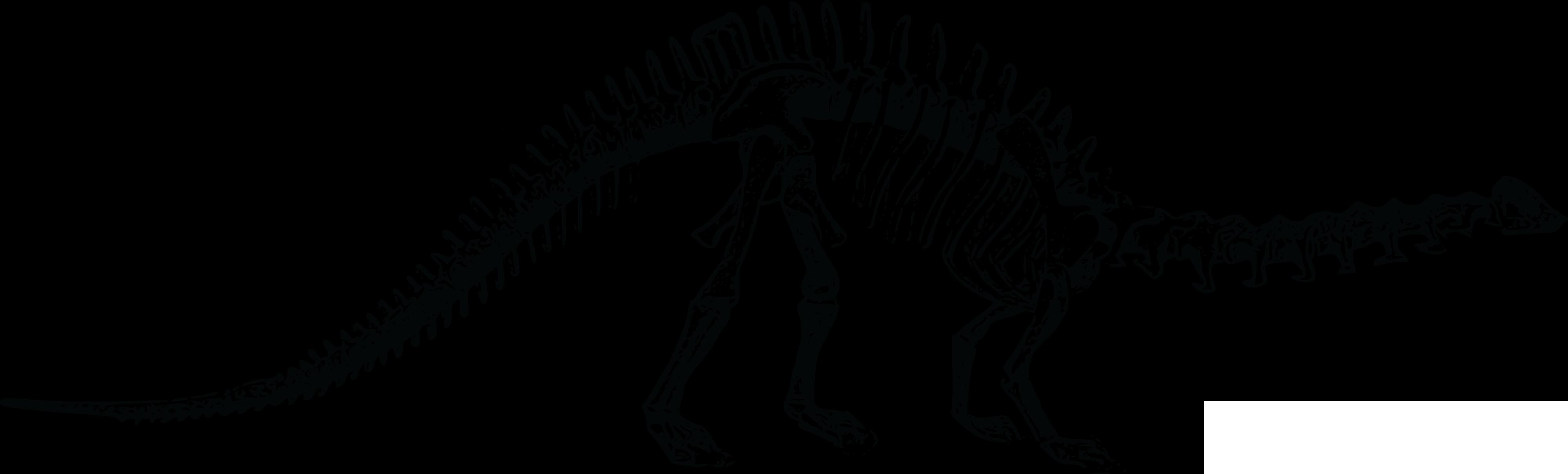 Dinosaur skeleton clip art. Fossil clipart stegosaurus