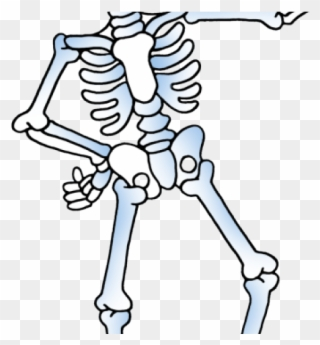 Bones cliparts free download. Clipart skeleton strong