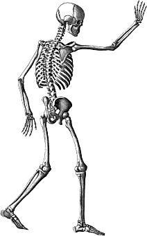 Clipart skeleton strong. Free public domain halloween