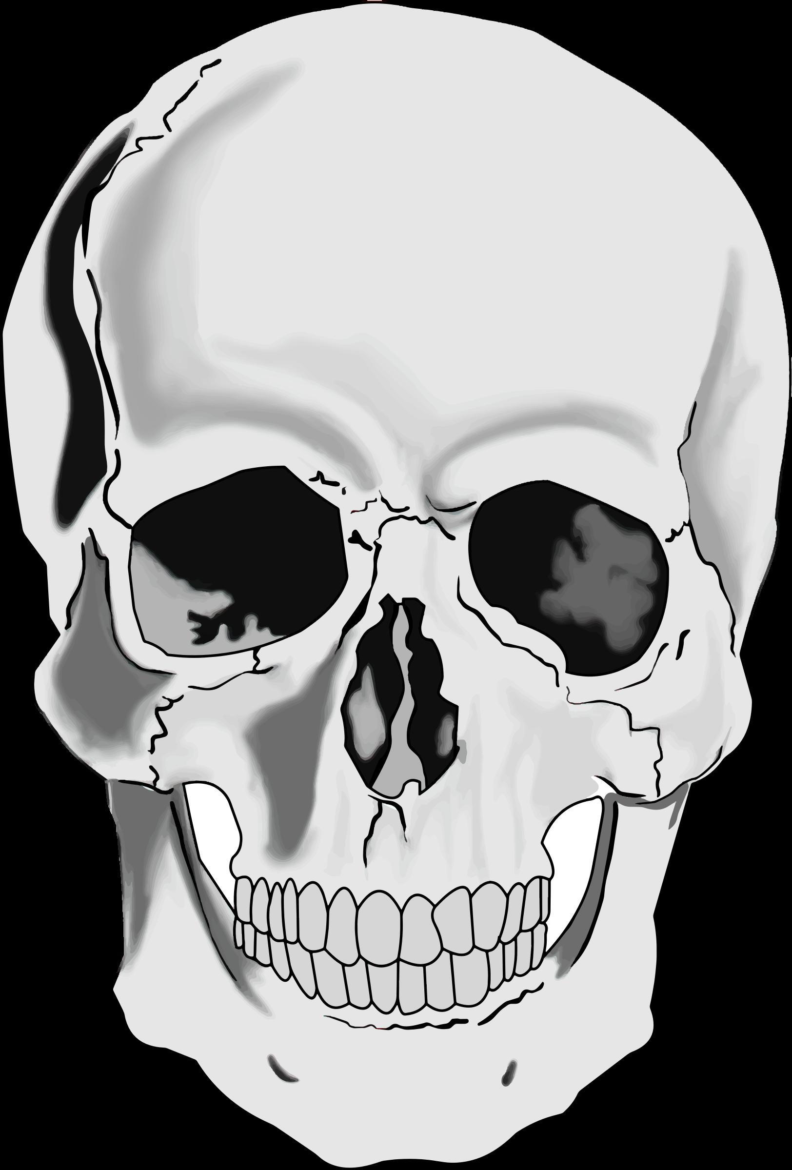 Clipart skull. Realistic human big image