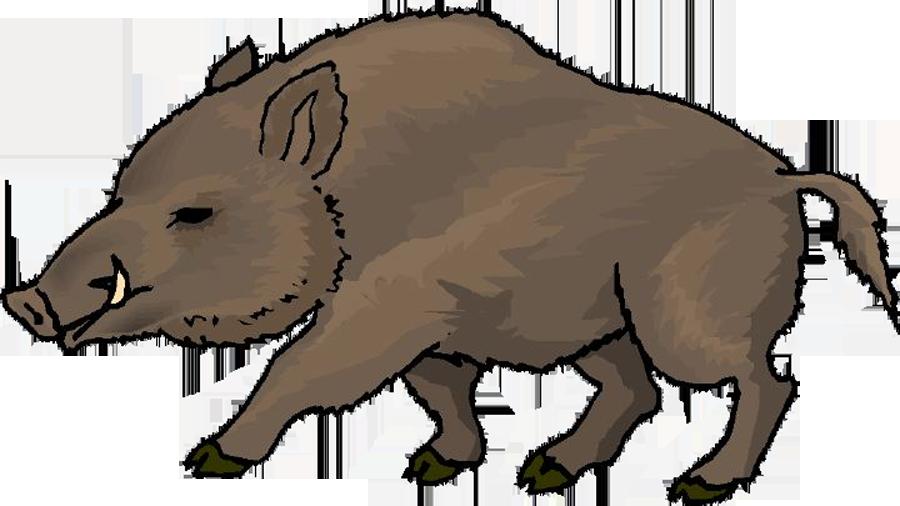Hunter clipart boar. Wild at getdrawings com
