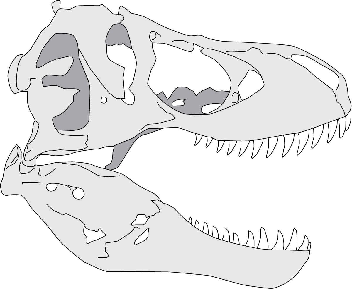 collection of t. Skeleton clipart trex