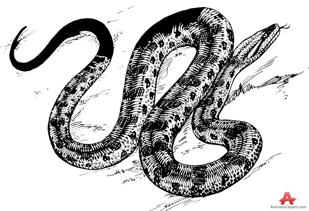 Drawing of anaconda free. Snake clipart design
