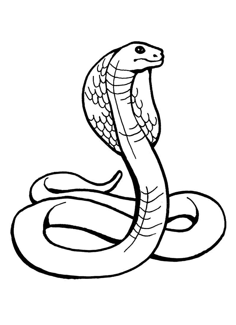 Snake clipart anaconda. Advice snakes for preschool