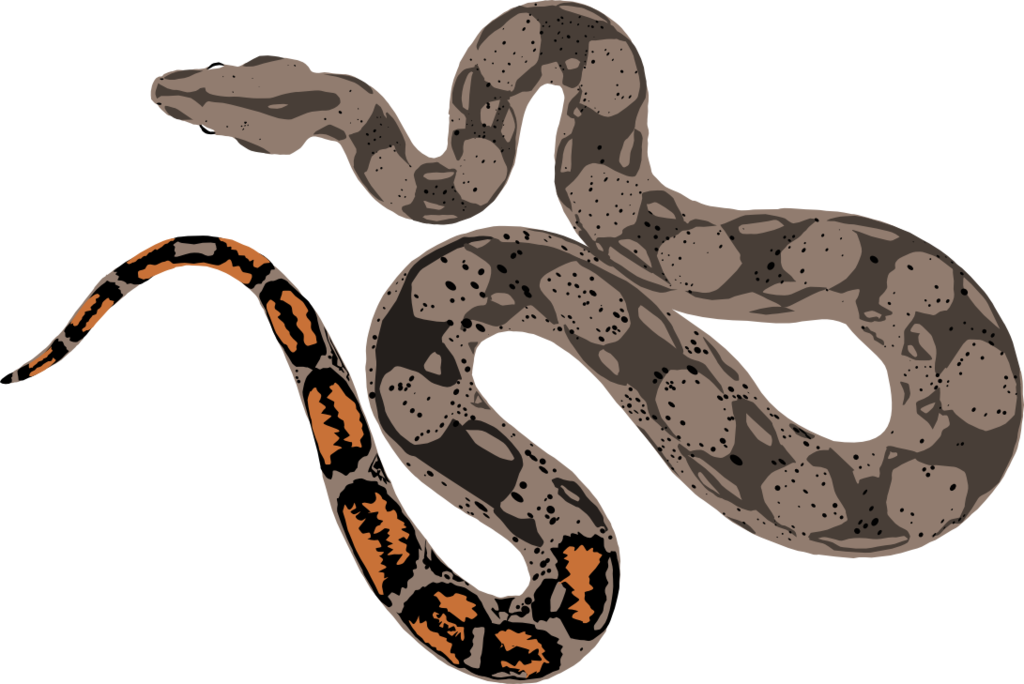 Drawing at getdrawings com. Snake clipart boa constrictor