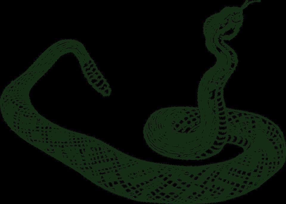 Snake clipart cobra.  collection of garter