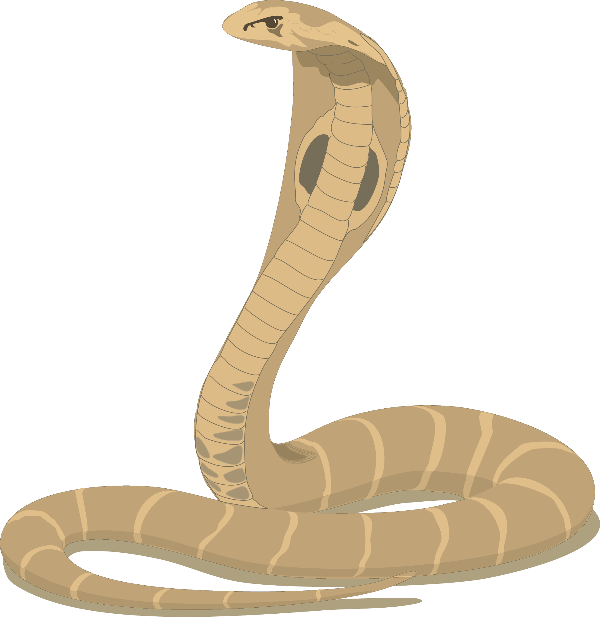 Free cliparts download clip. Clipart snake cobra