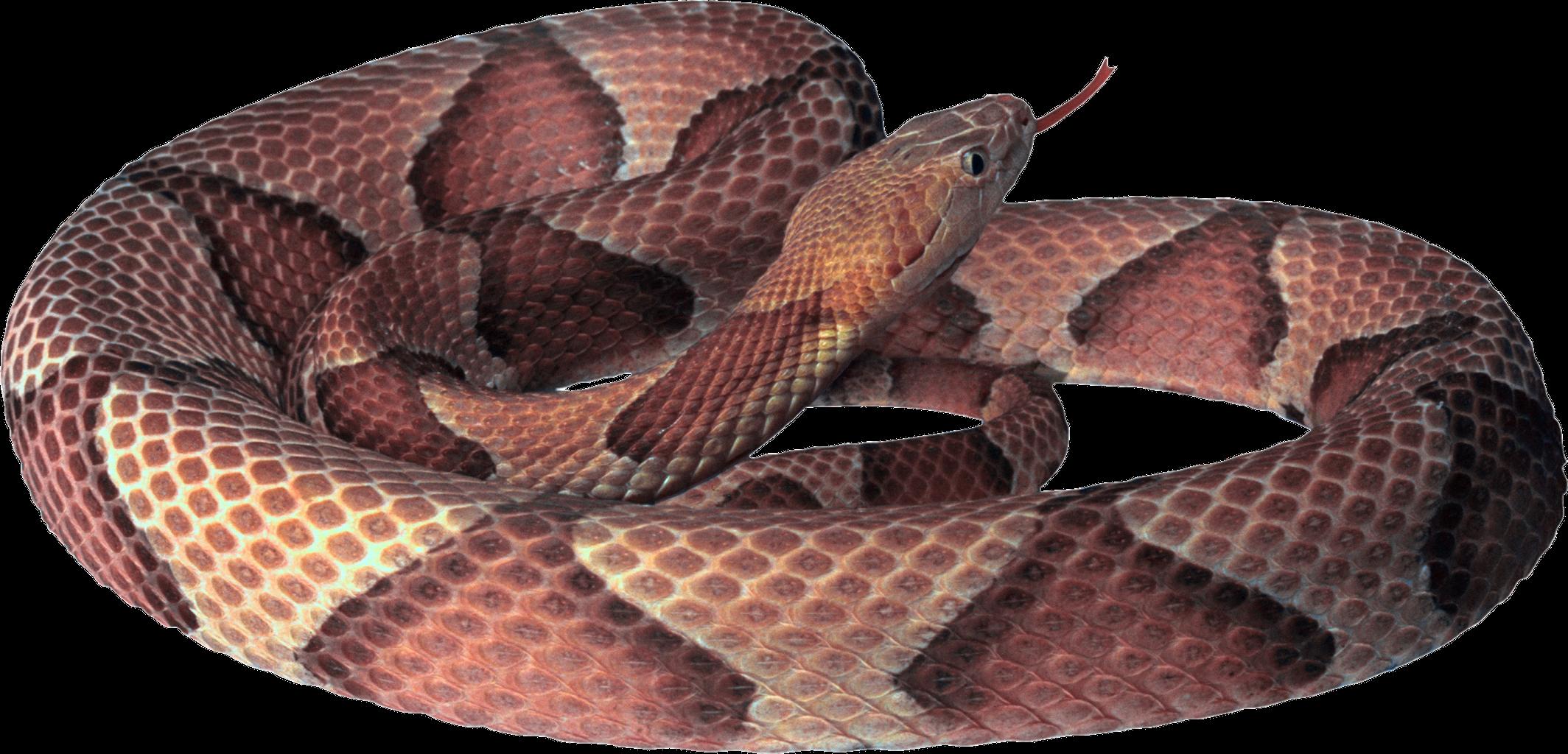Sticker by taliafera report. Snake clipart copperhead