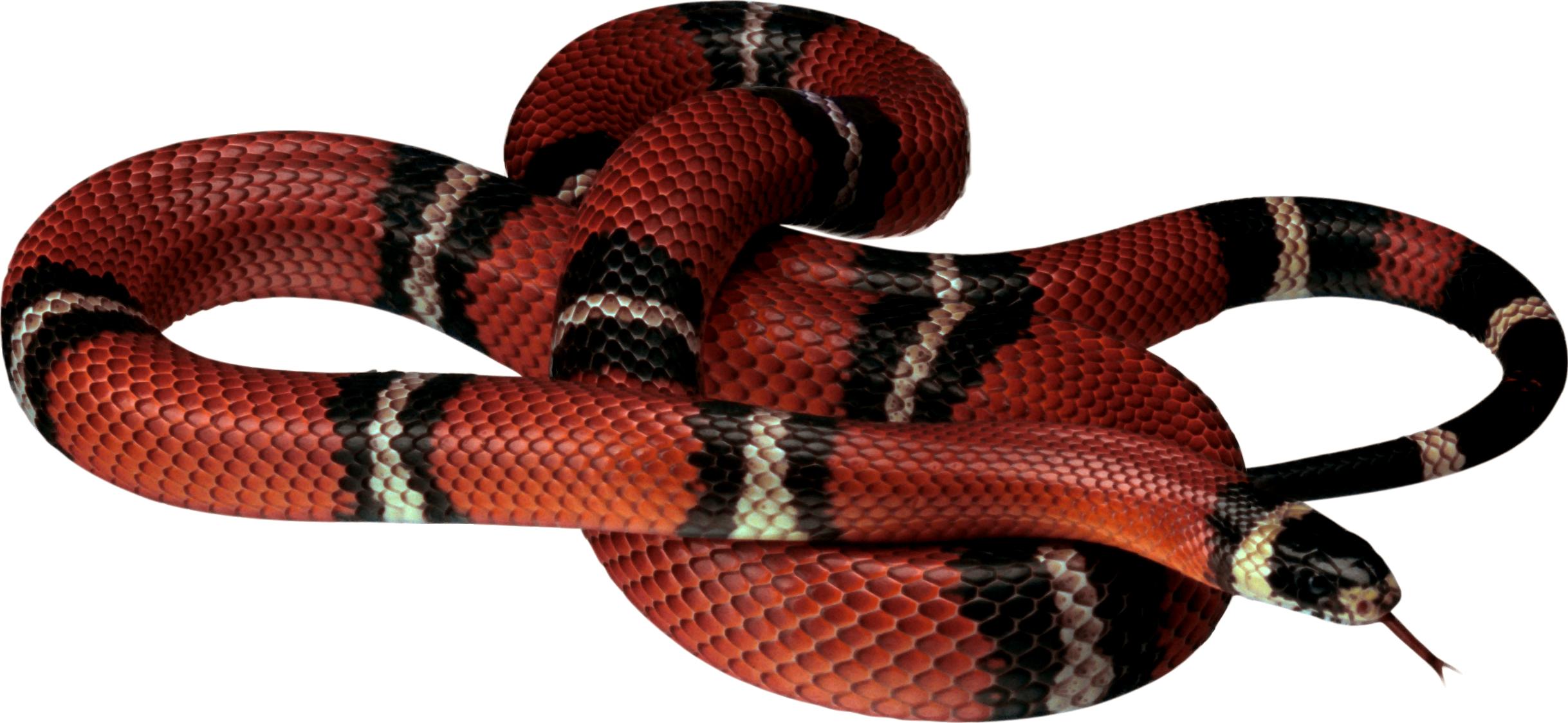 Png pinterest. Snake clipart forest animal