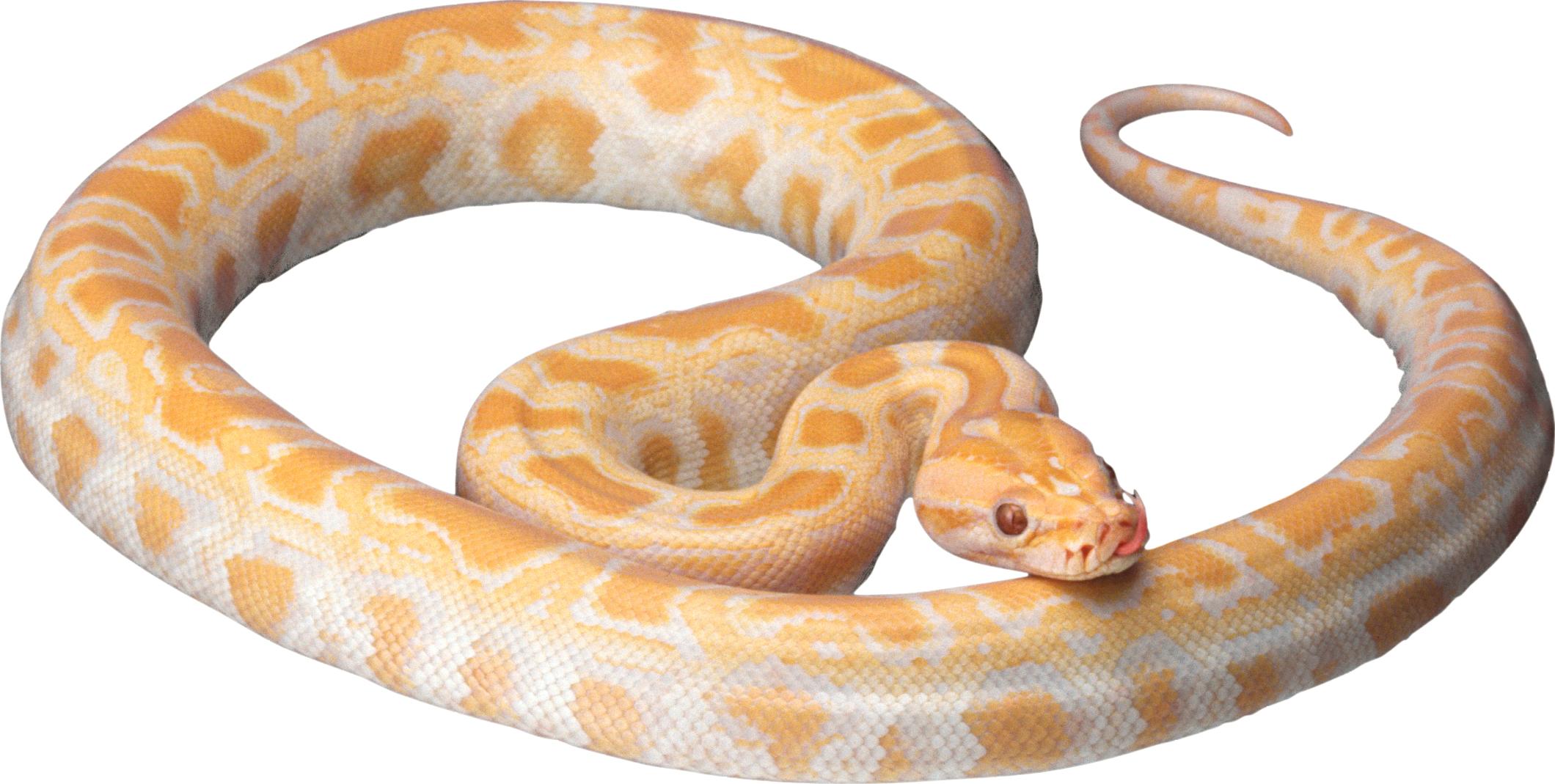 Snake clipart wild animal. White png pinterest
