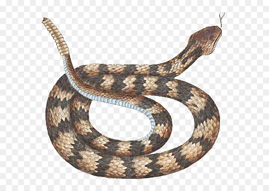 Clipart snake gopher snake. Cartoon transparent clip art