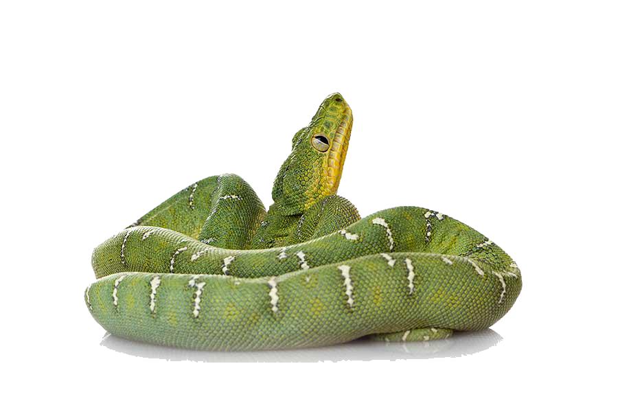Png file mart. Clipart snake green snake