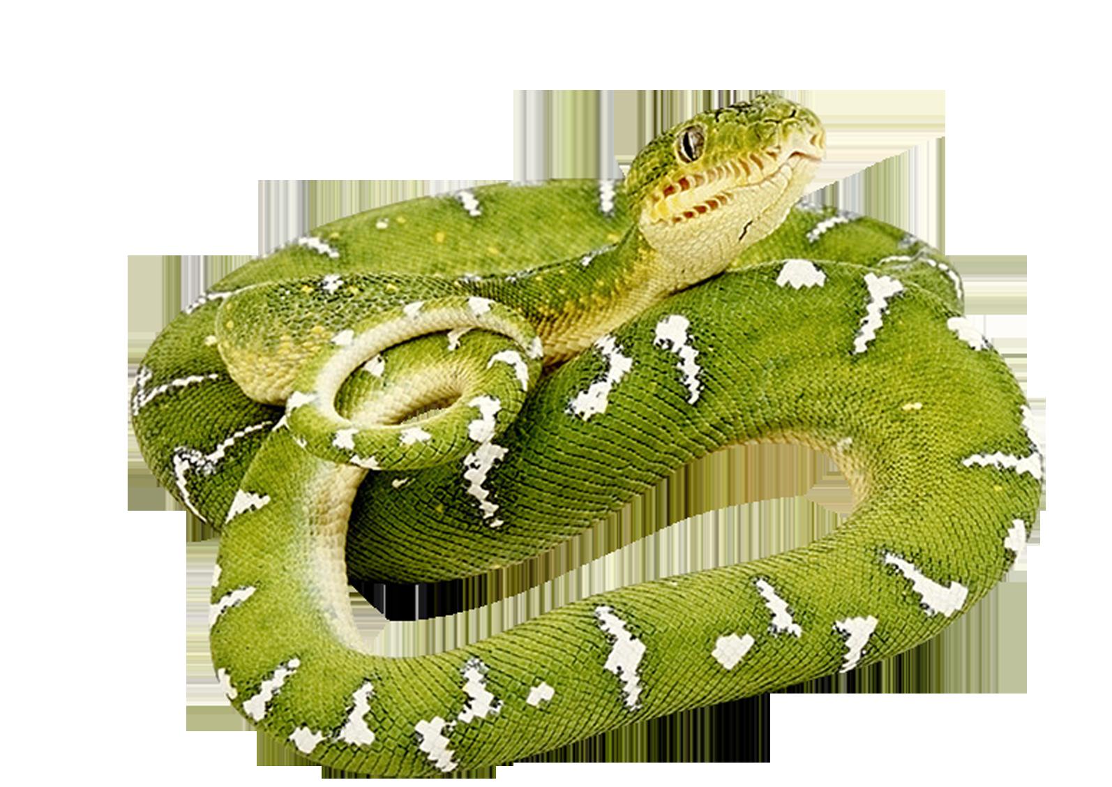Clipart snake green snake. Png animal pinterest