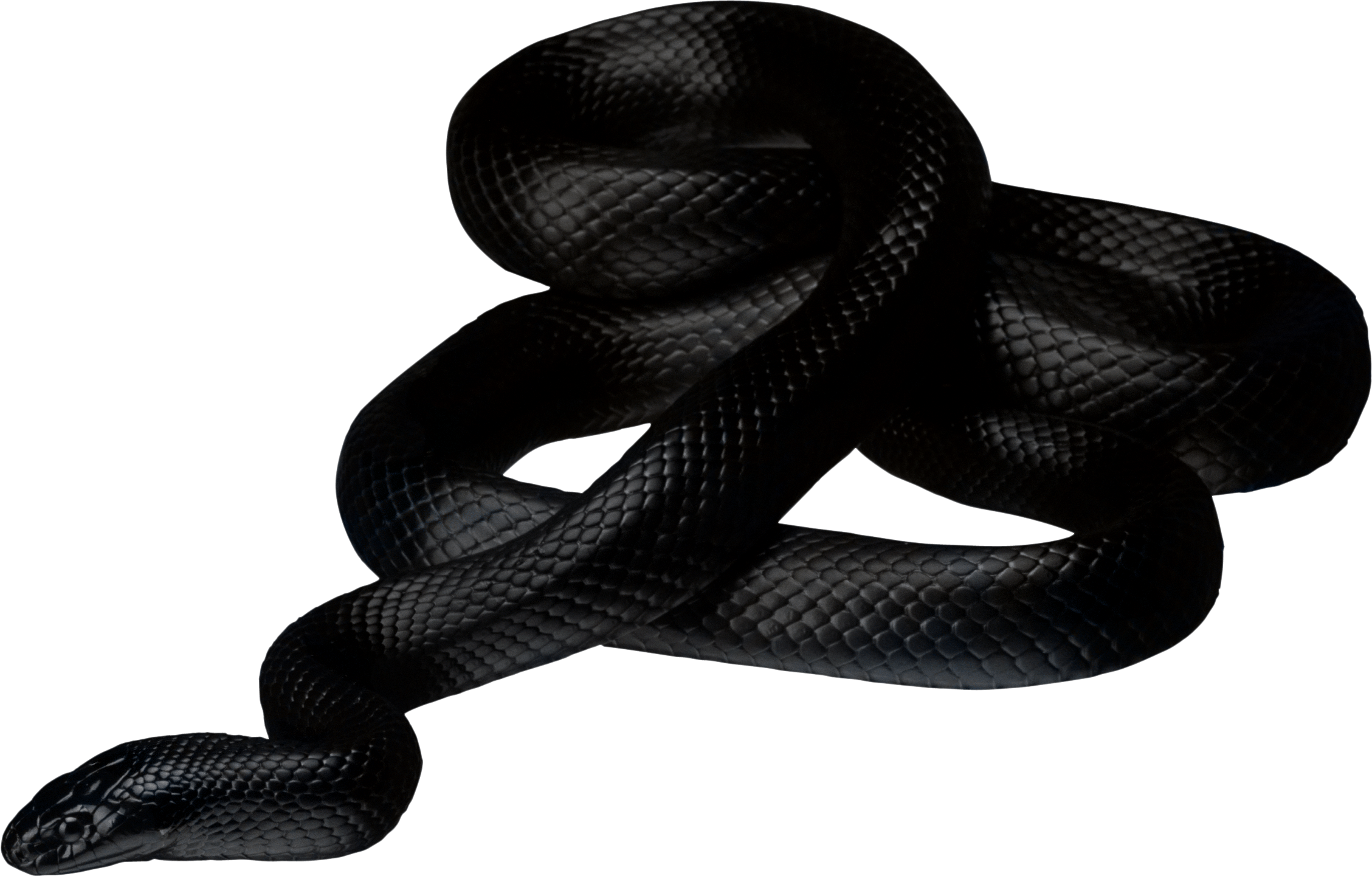 Clipart snake king snake. Black transparent png stickpng