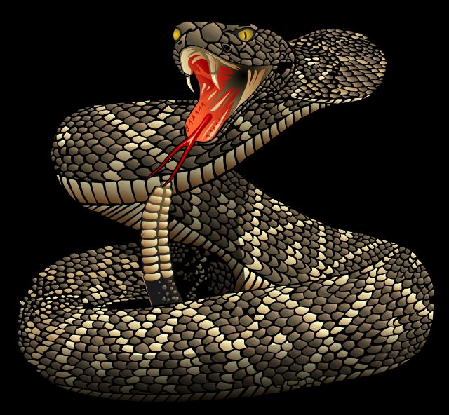 Snake clipart vintage. Diamondback rattlesnake pictures wow