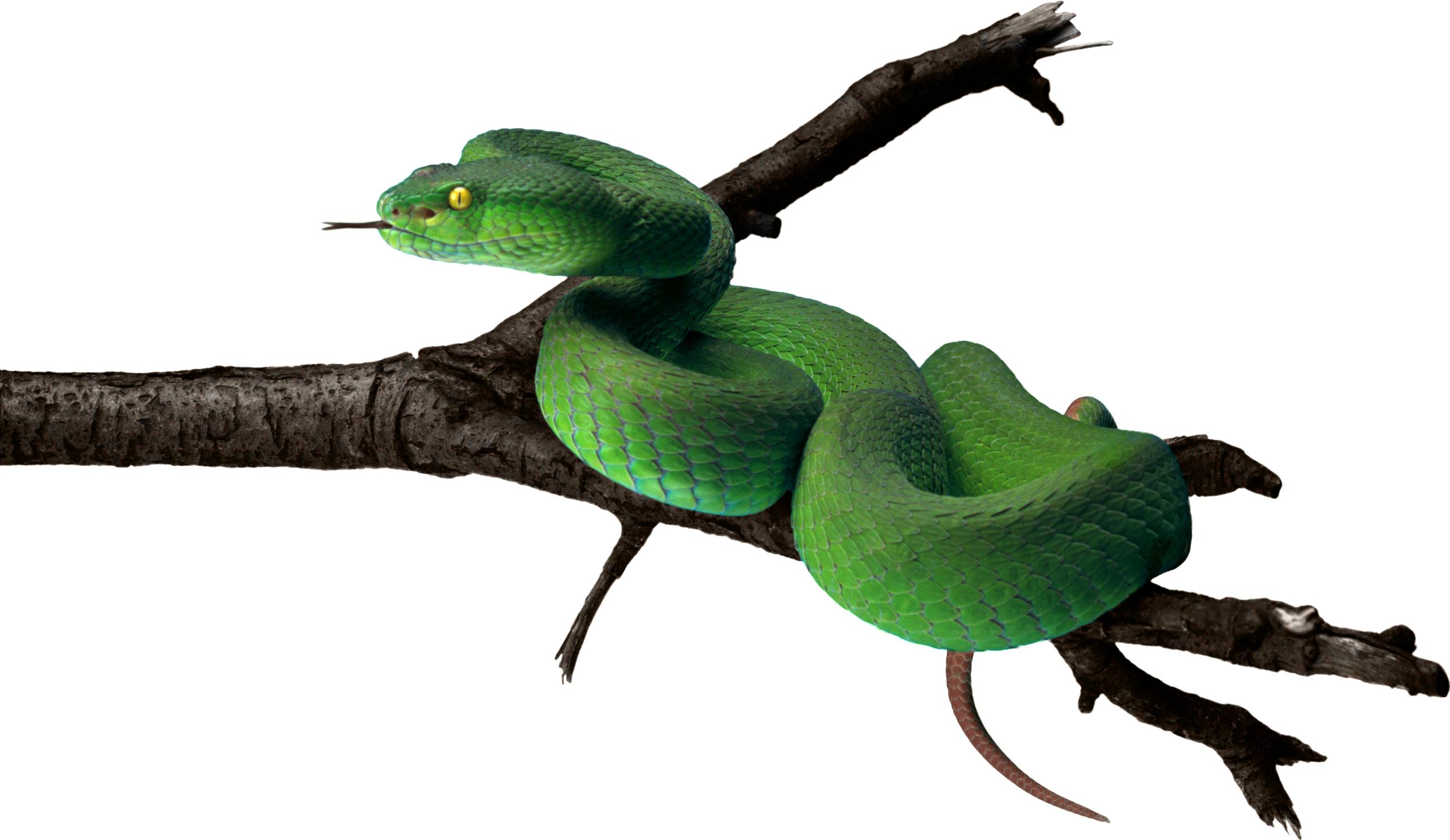 Green png animal pinterest. Snake clipart copperhead