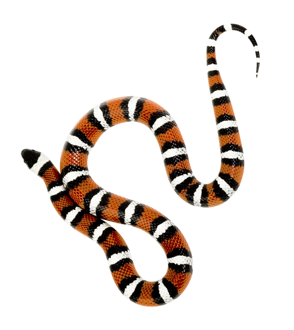 Png image purepng free. Snake clipart poison