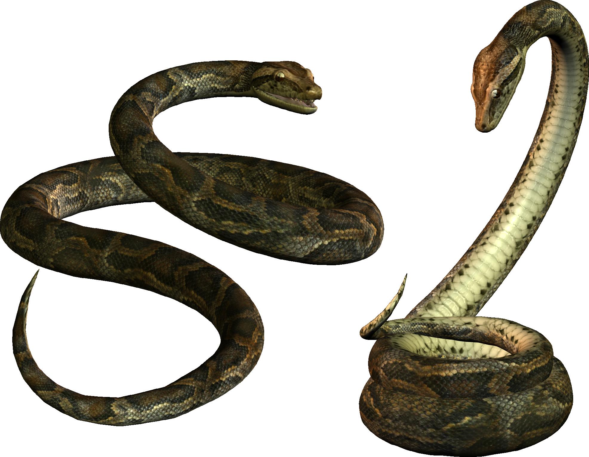 Snake clipart tiger snake. Python png transparent images