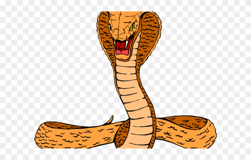 Clip art png download. Snake clipart realistic