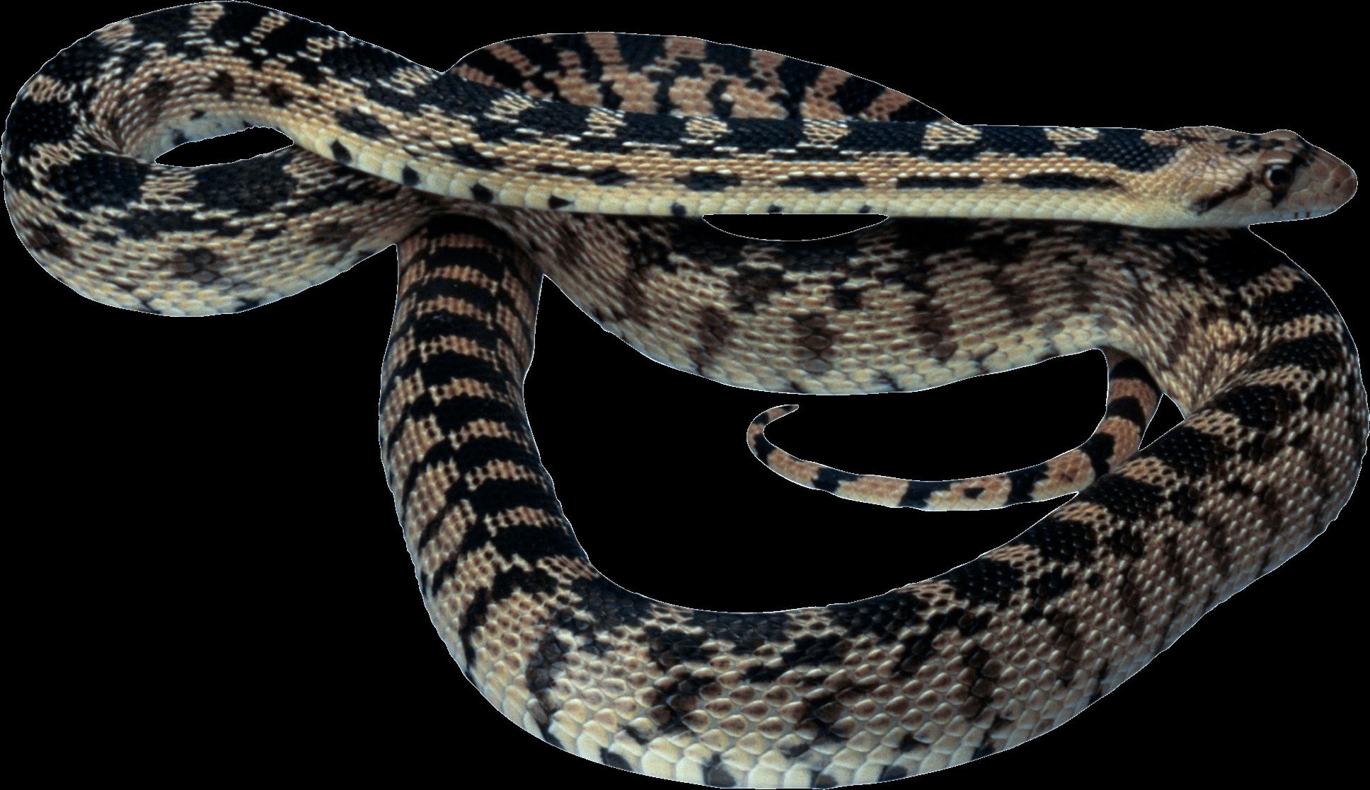 Png image purepng free. Snake clipart rattlesnake