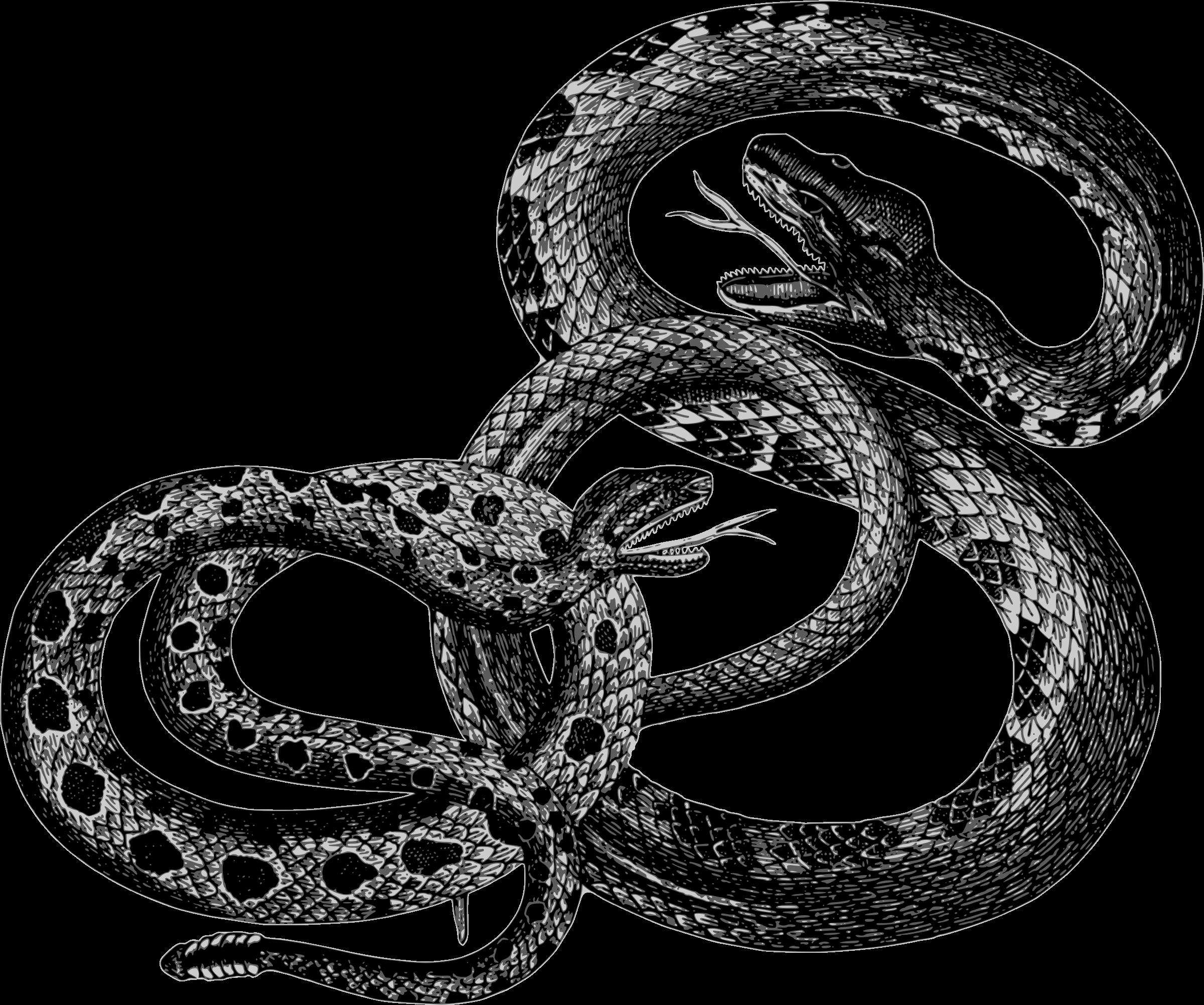 Snakes big image png. Snake clipart vintage