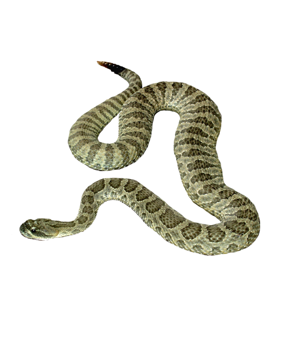 Image qygjxz . Snake clipart water moccasin