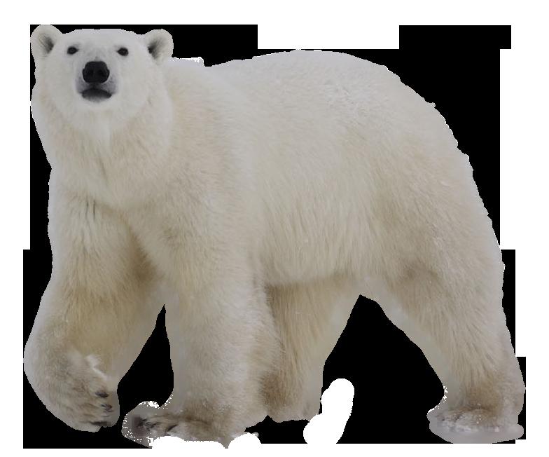 fishing clipart polar bear