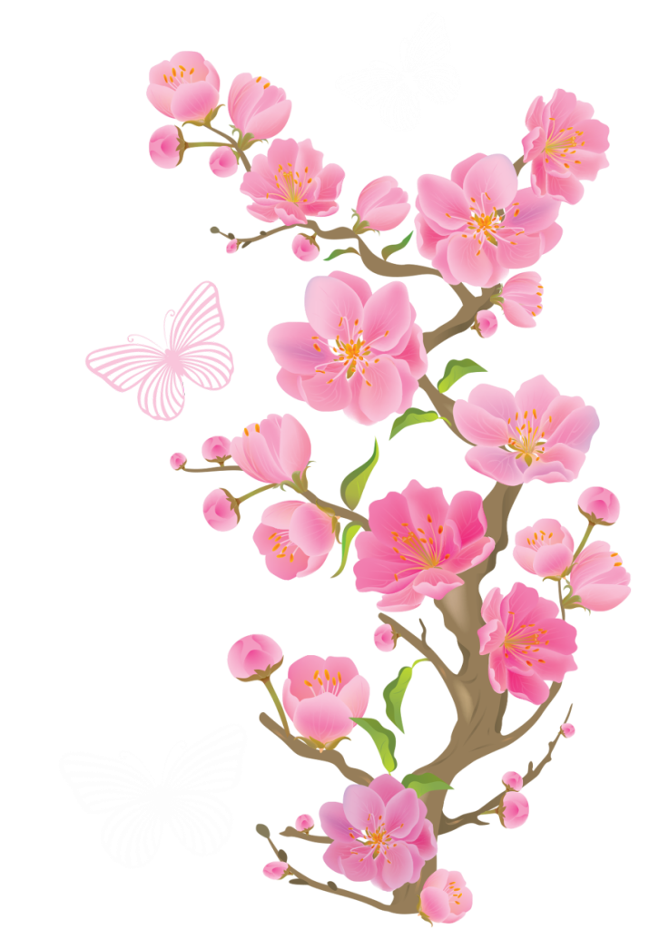 Spring cherry blossoms with. Japanese clipart peach blossom