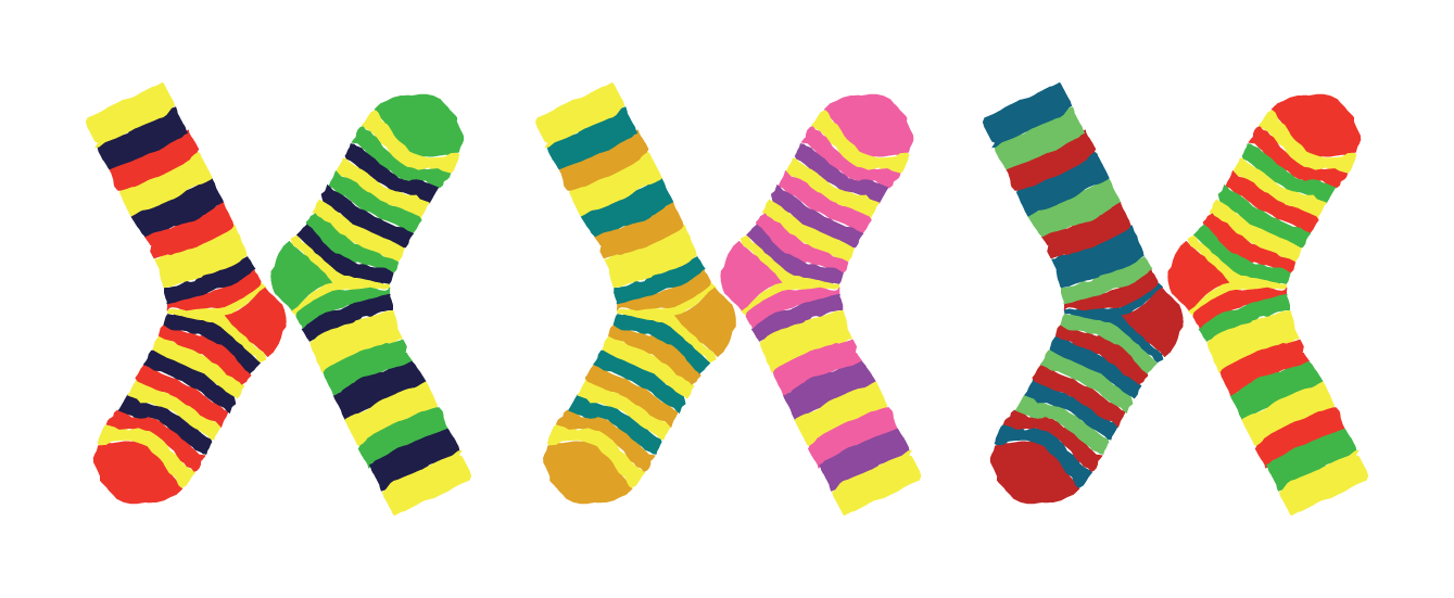 Free on dumielauxepices net. Clipart socks calcetines