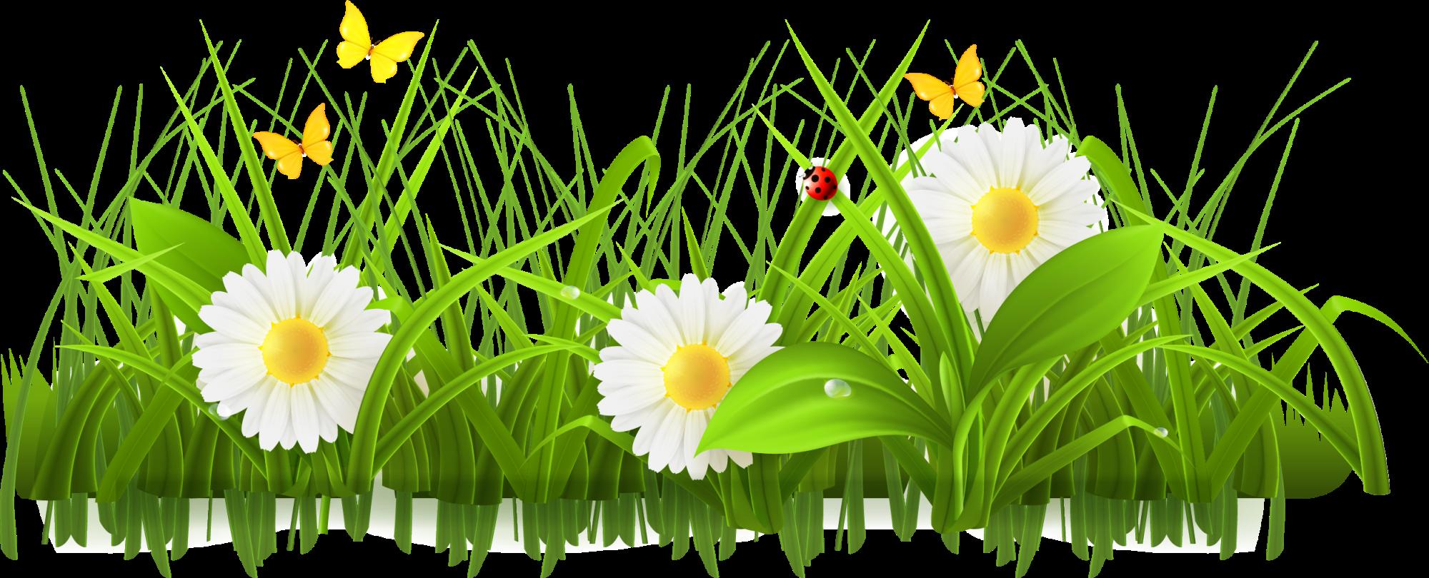 Daisy clipart springtime flower. Spring stock photography clip