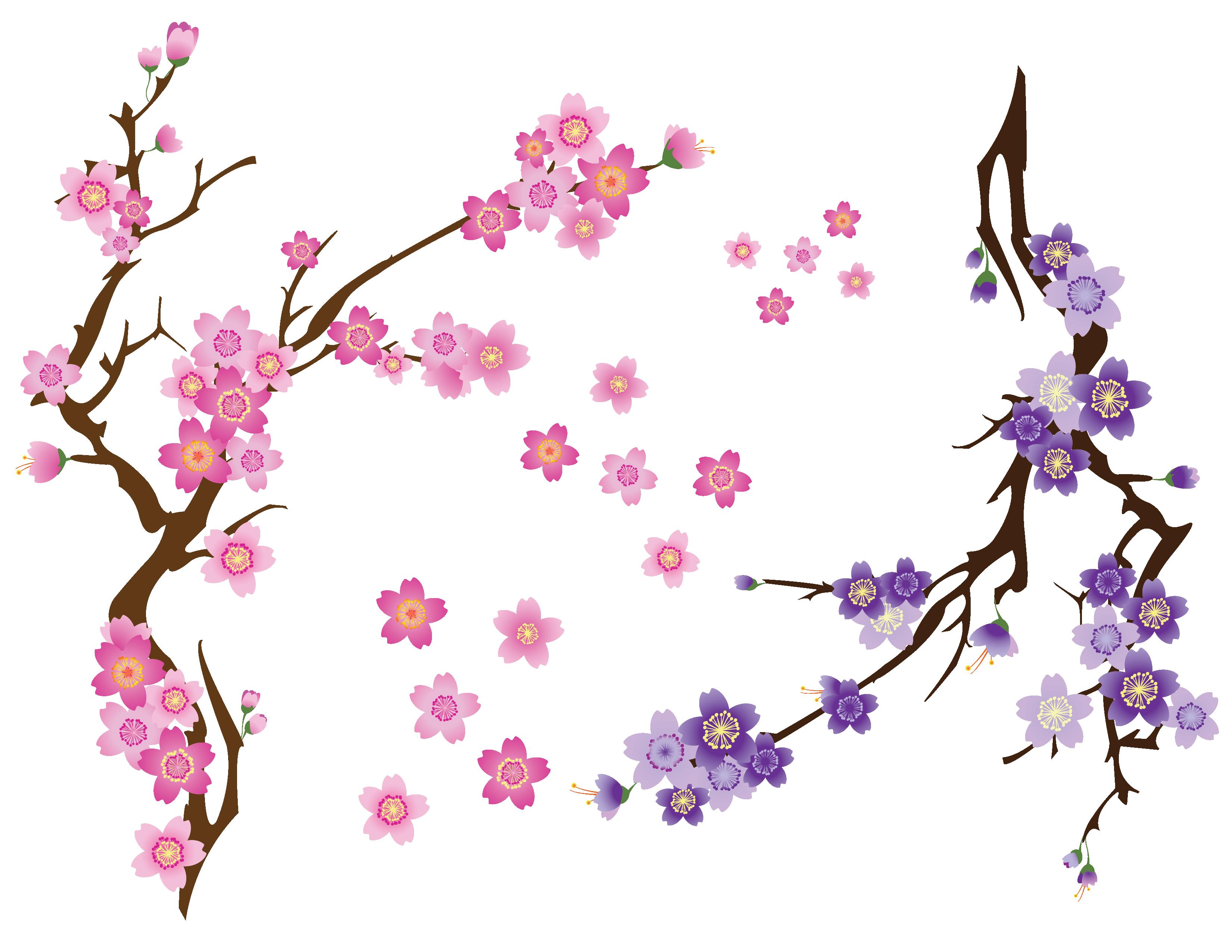 Blossom drawing clip art. Mango clipart cherry