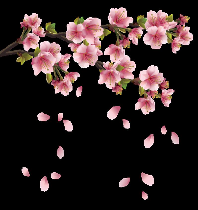 Les m li los. Japanese clipart japan cherry blossom