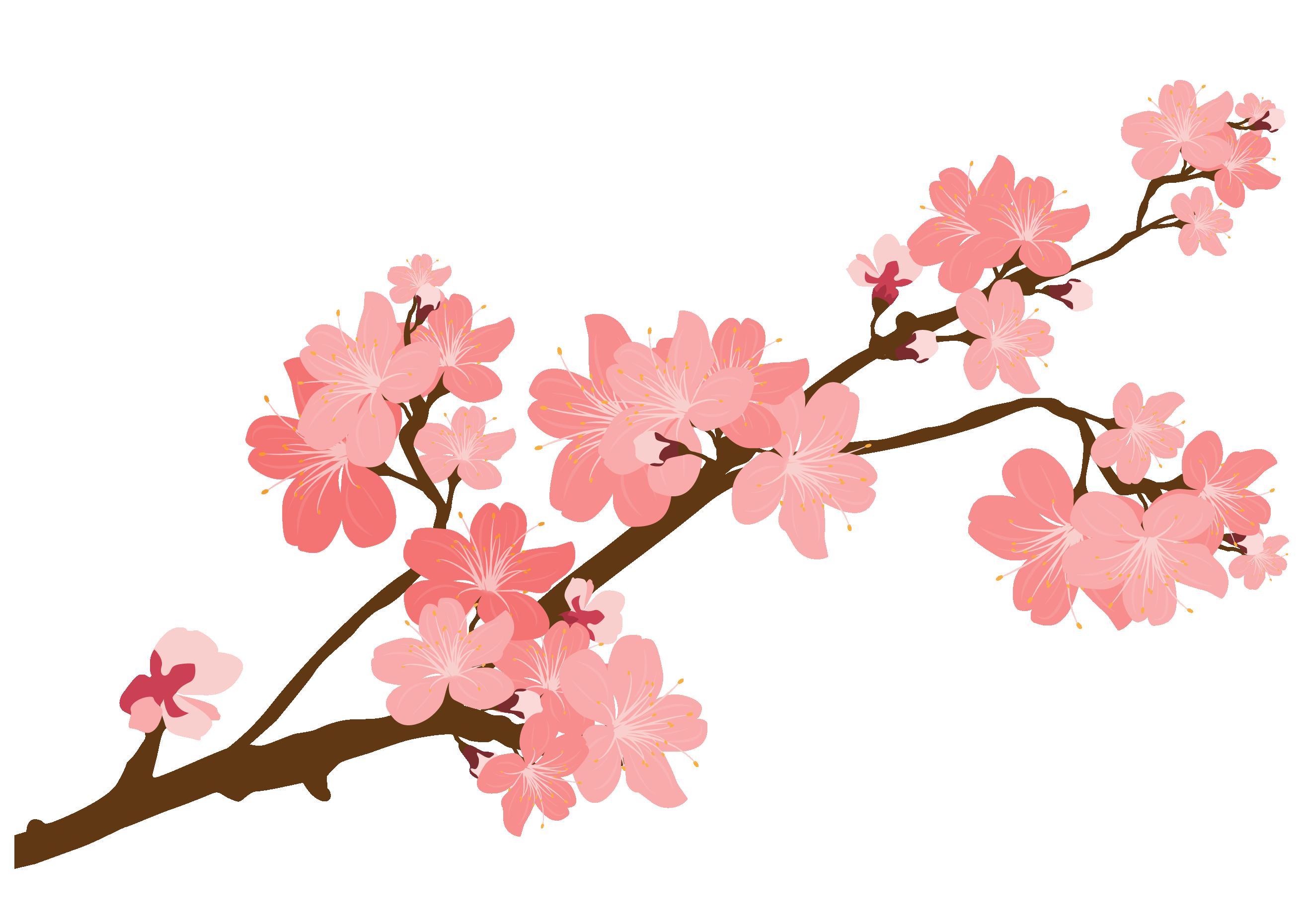 Blossom sticker clip art. Mango clipart cherry