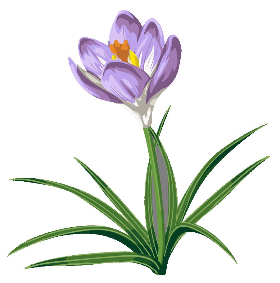 clipart spring crocus