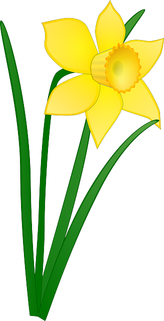 Daffodil clipart flower blossom. Free image on pixabay