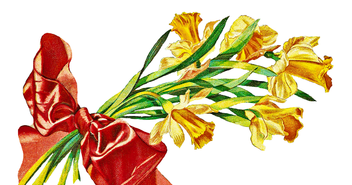 Daffodil clipart flower blossom. Catnipstudiocollage free vintage clip