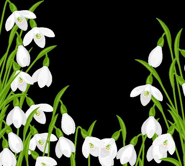 Snowdrops png vir gok. Clipart summer decoration