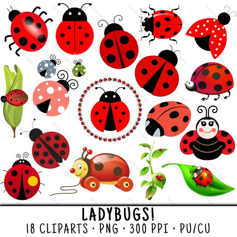 Ladybug clipart real. Spring clip art png
