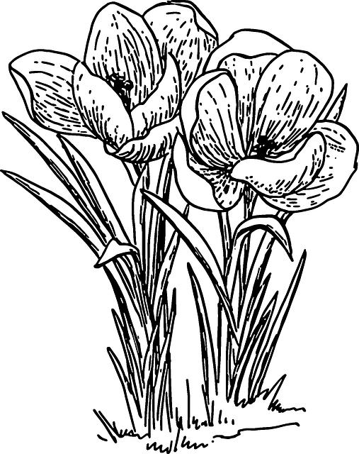 Free image on pixabay. Flower outline png