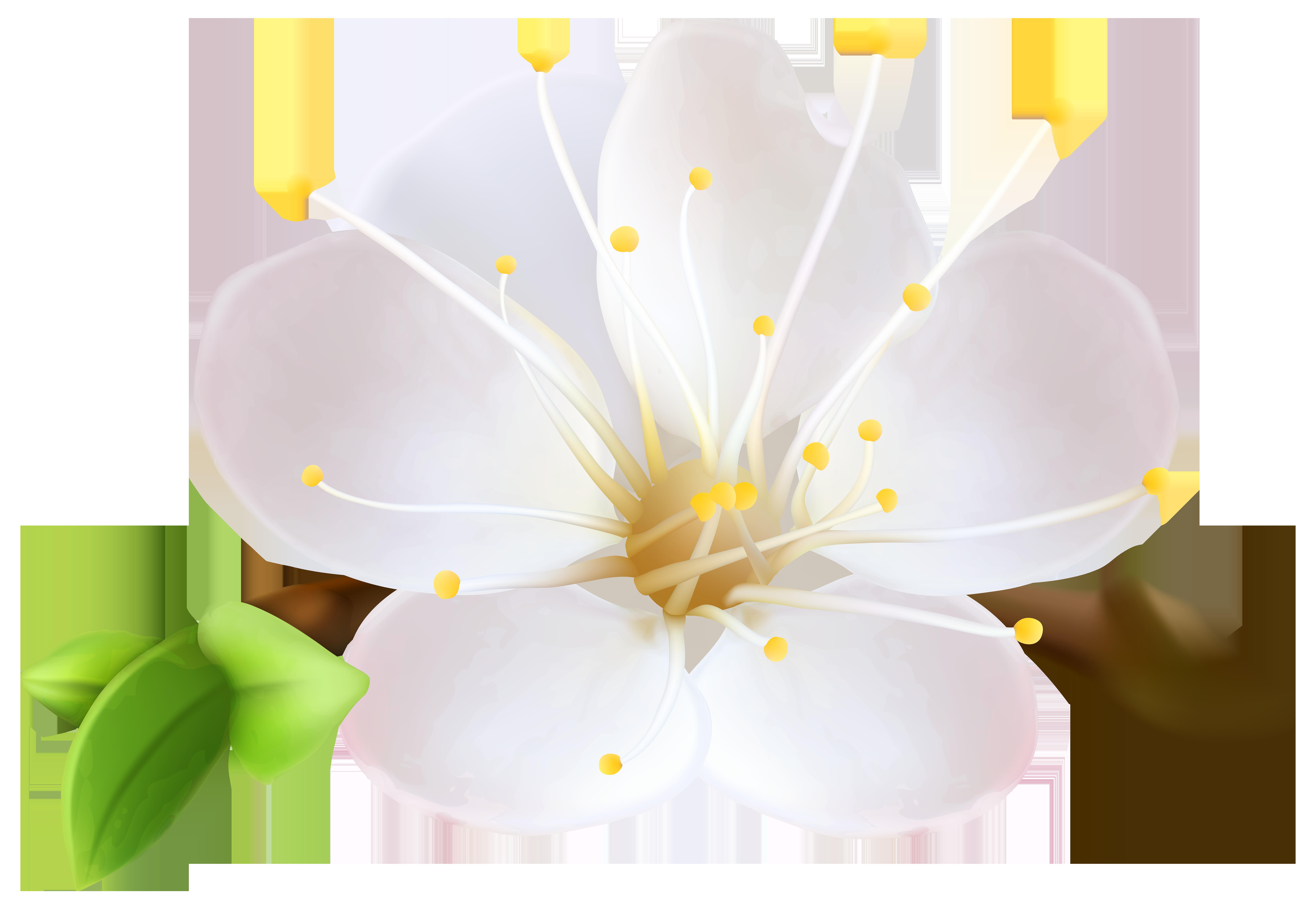 Flower png clip art. Clipart spring wildflower