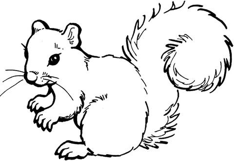 Clipart squirrel color. Coloring page free printable