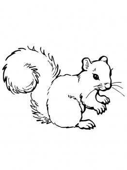 Grey Squirrel coloring page | Free Printable Coloring Pages | 350x262
