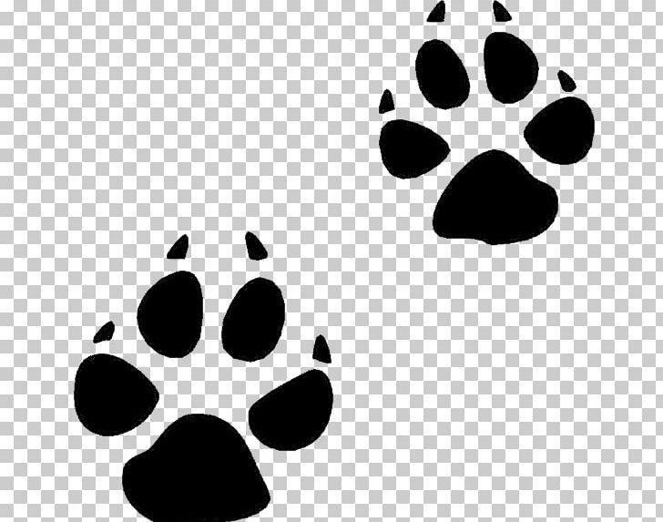 Footprints clipart squirrel. Bear animal track footprint